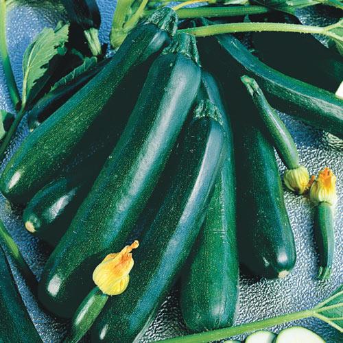 Black Magic Zucchini Summer Squash Seed