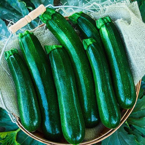 Jackpot Hybrid Zucchini Summer Squash Seed