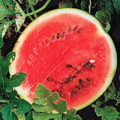 Sugar Baby Watermelon Seed