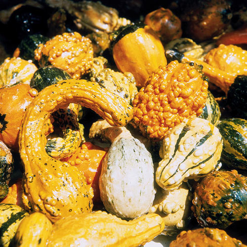 Large & Small Gourd Seed Mix