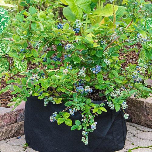 Grow Tub<sup>®</sup> 20 Gallon Garden Container