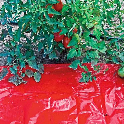 Turbo-Tomato!™ Mulch Sheet