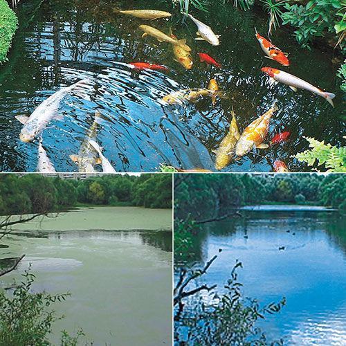 Watergarden & Pond Beneficial Bacteria Tablets