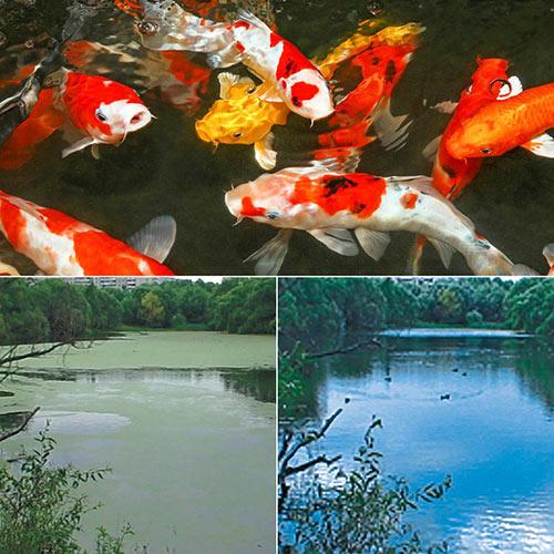 Watergarden & Pond Phosphate Binder