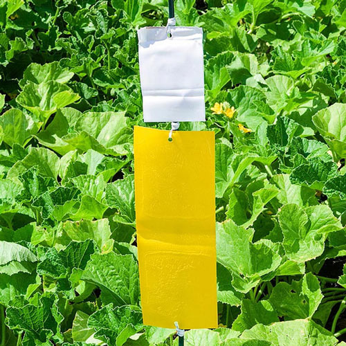 Sure-Catch™ Cucumber Beetle Trap & Lure