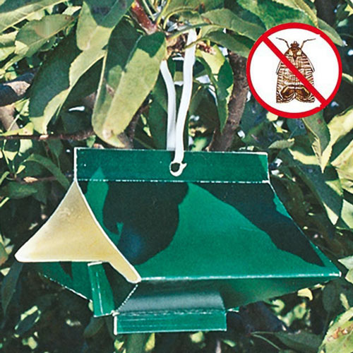 Apple Tree Pest Lure & Trap