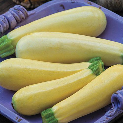 Chiffon Hybrid Summer Squash Seed
