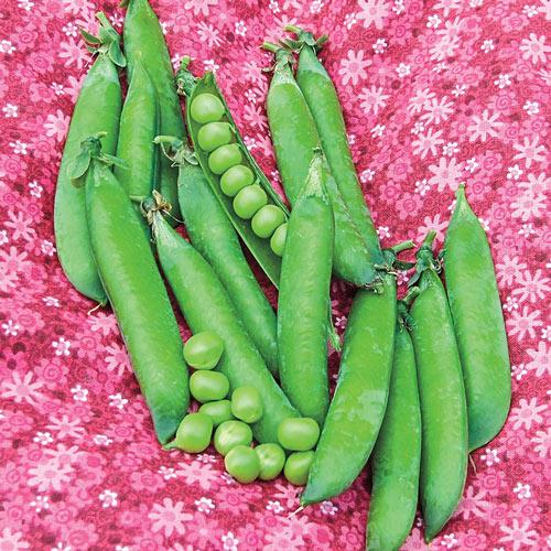 Sweet Pick Pea Seed