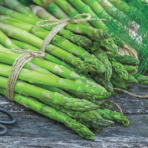 AsparaBest<sup>®</sup> Asparagus Plant