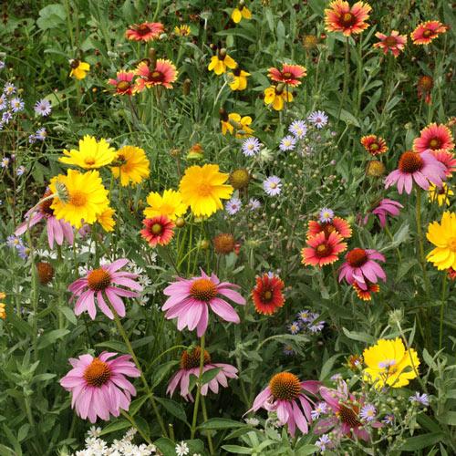 Honey Bee Flower Seed Mixture