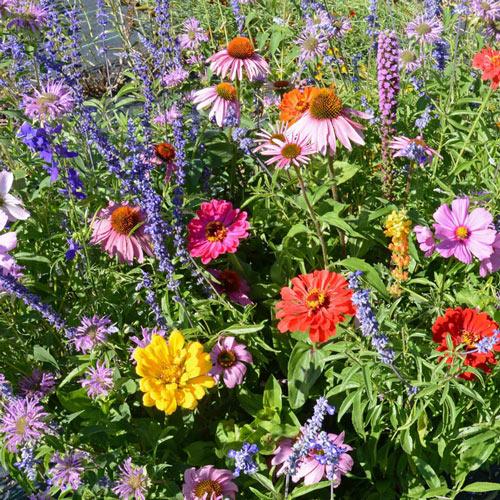 Bumblebee Buffet Flower Seed Mixture