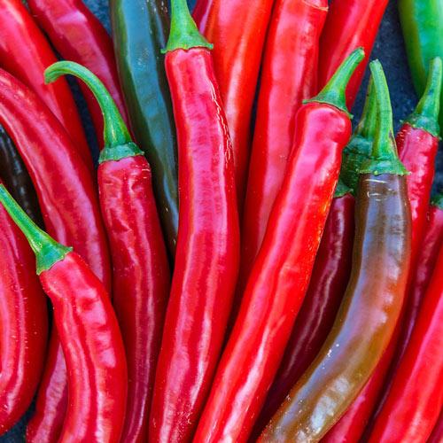 Gurney's<sup>®</sup> Salsa Hybrid Hot Pepper