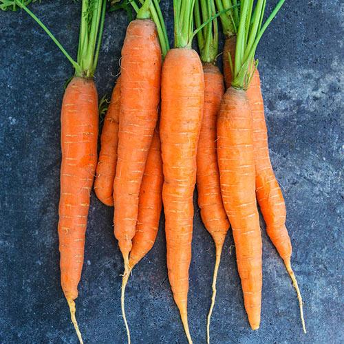 Napoli Hybrid Carrot Seed