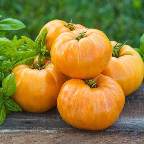Orange Jazz Tomato