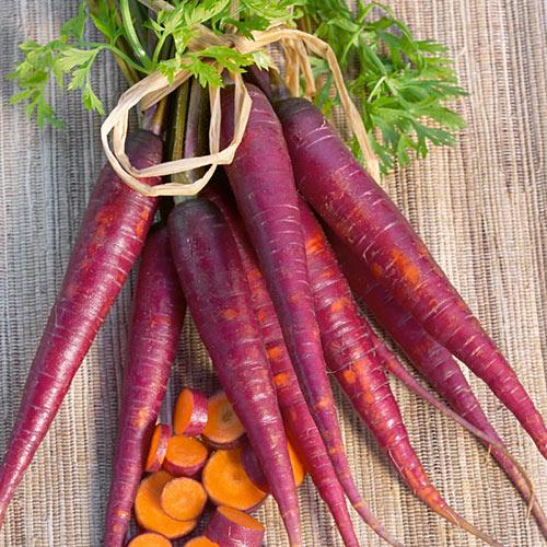Cosmic Purple Carrot Seed