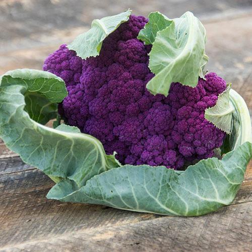 Mulberry Hybrid Cauliflower