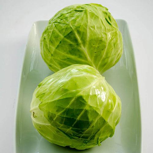 Tiara Hybrid Cabbage Seed