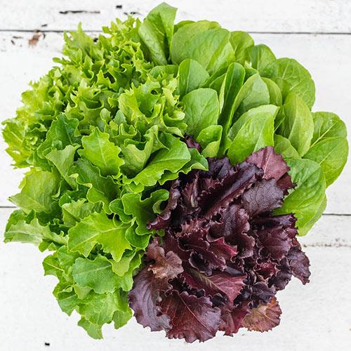 Flash Baby Leaf Mix Lettuce