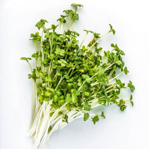 Organic Mustard Oriental Wasabi Microgreens - Seed