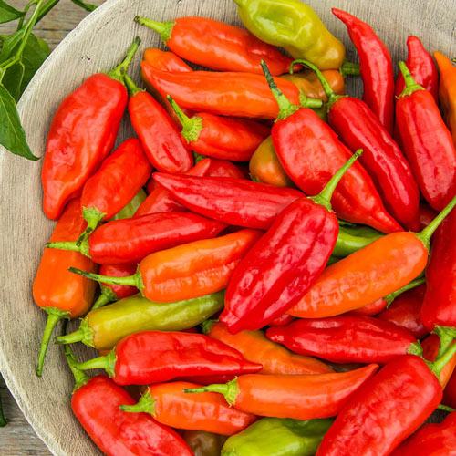 Aji Rico Hybrid Hot Pepper