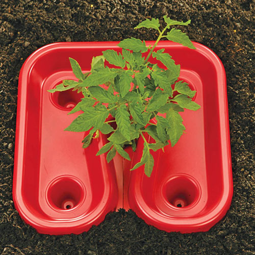 Tomato & Pepper Growing Automator Tray