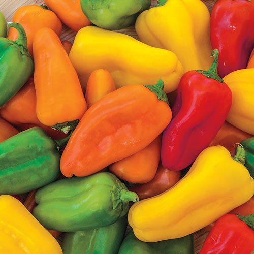 Yum Yums Hybrid Mixed Mini Bells Sweet Pepper