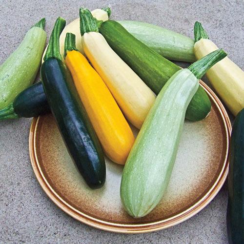 Summer Bounty Hybrid Summer Squash Seed Blend