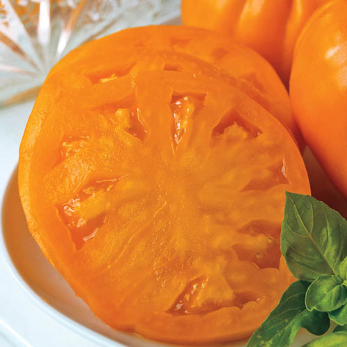 Gurney's<sup>®</sup> Orange Whopper Hybrid Tomato