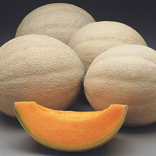 Athena Hybrid Cantaloupe Seed