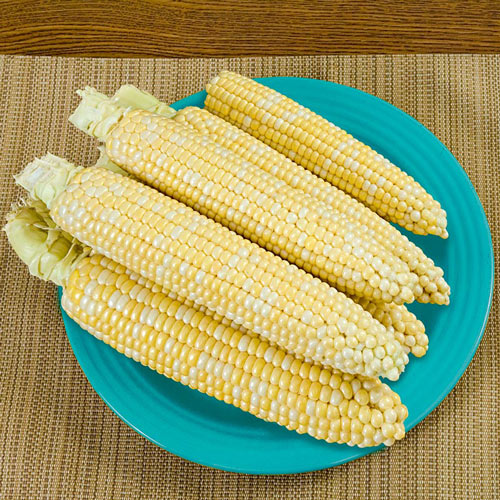 That's Delicious! Hybrid Sweet Corn Seed (sh2)