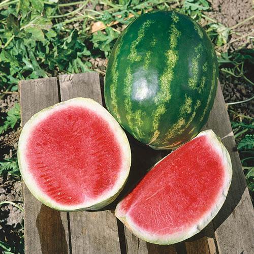 Triple Star Hybrid Watermelon Seed