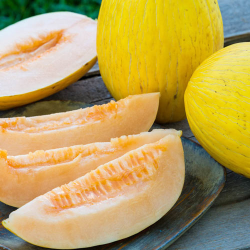 Honey Sak Hybrid Melon Seed