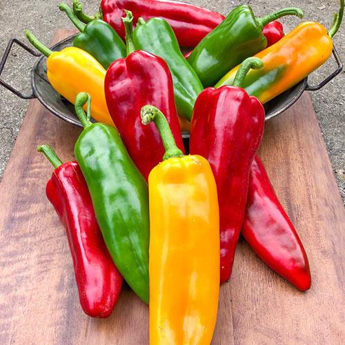 Gurney's<sup>®</sup> Triple Delight Hybrid Sweet Pepper