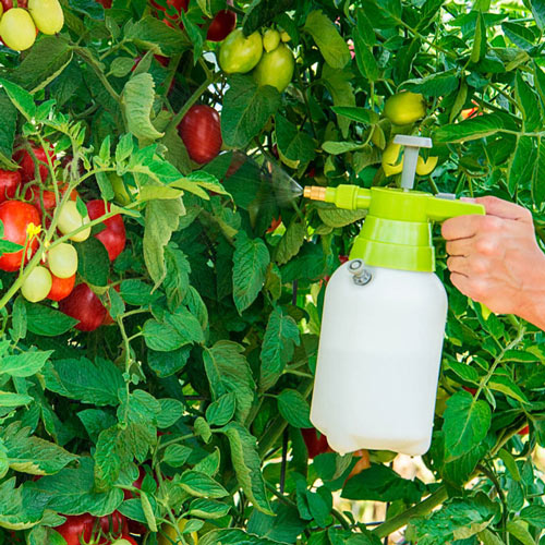 Handy Pressurized Sprayer