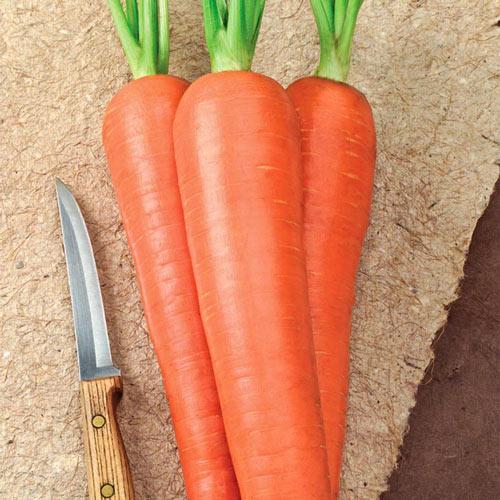 Envy Hybrid Carrot Seed