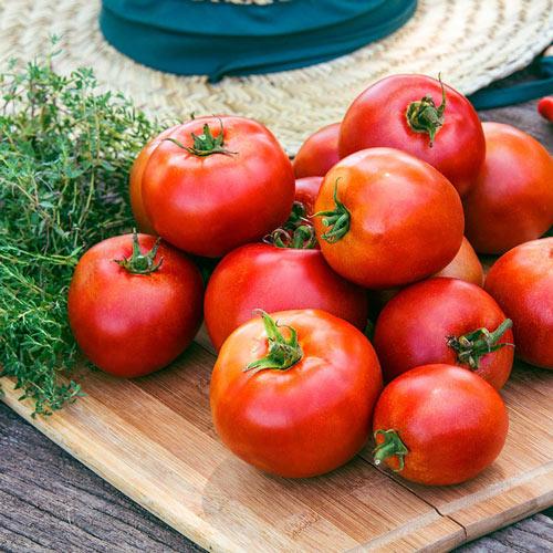 Big League Hybrid Tomato