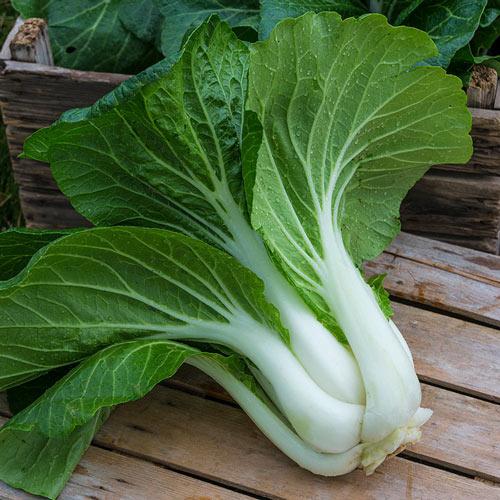 Bopak Hybrid Pak Choi Seed
