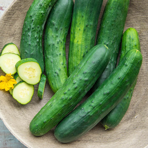 Americana Slicing Hybrid Cucumber Seed