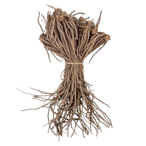 Jersey Supreme Asparagus Plant