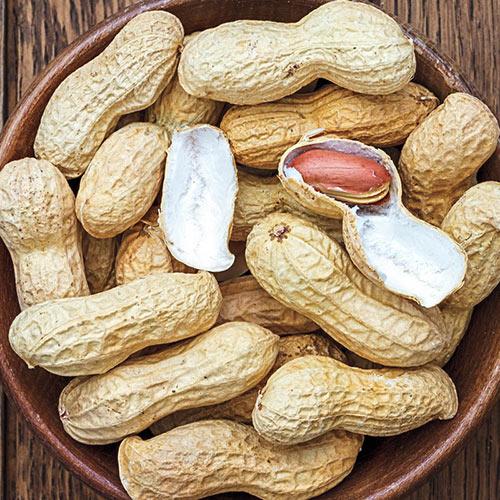 Wynne Virginia Peanut Seed