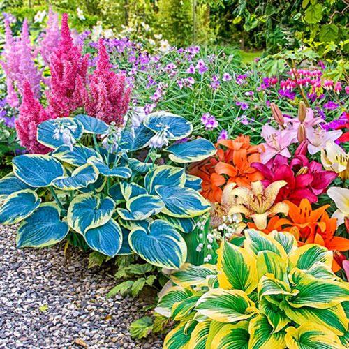 Shade Garden Plant Kit