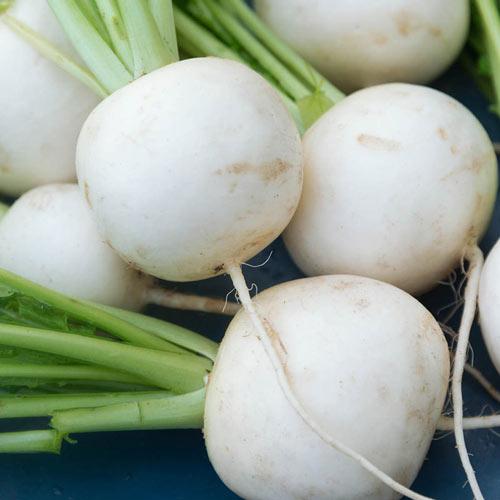 Fuku Komachi Hybrid Turnip Seed
