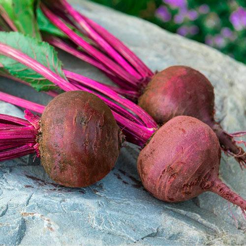 Red Titan Hybrid Beet Seed
