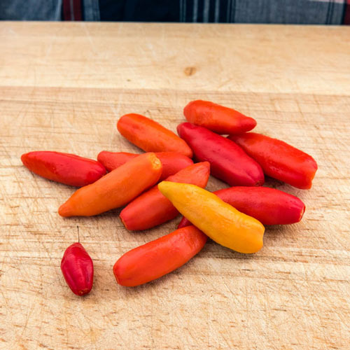 Tabasco Hot Pepper Seed
