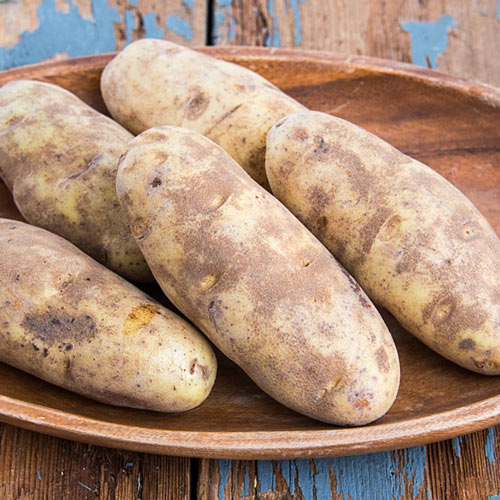 Burbank Russett Potato