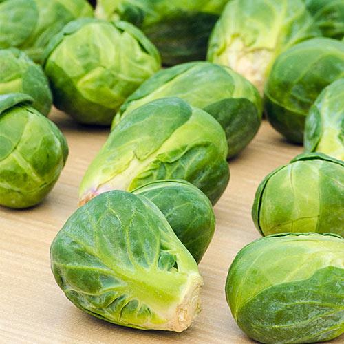 Jade Cross Hybrid Brussels Sprouts seed