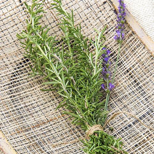 Rosemary Herb — Plant