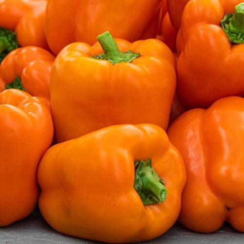 Orange Marmalade Hybrid Sweet Bell Pepper