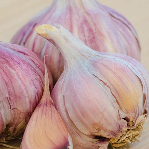 Purple Glazer Hardneck Garlic