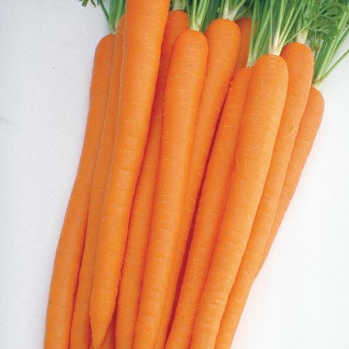 Sugarsnax Hybrid Carrot Seed